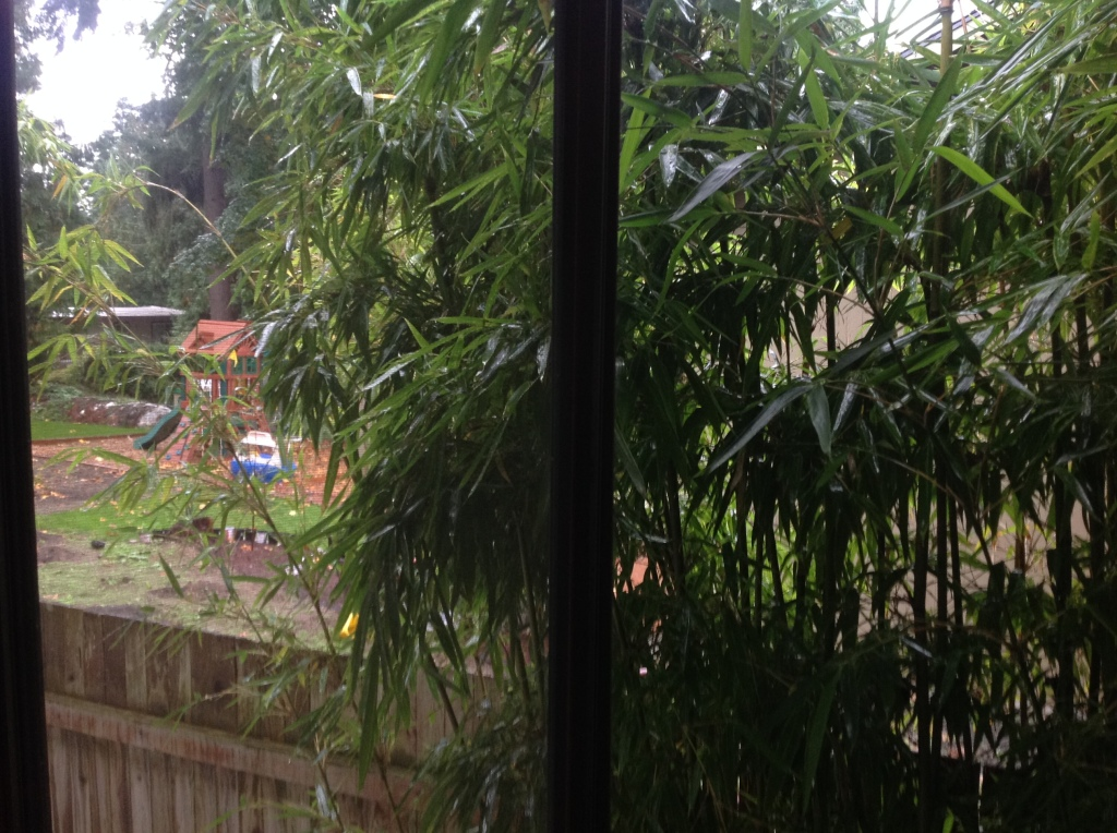 12 years of bamboo growth screening the yard someone finally cares about.